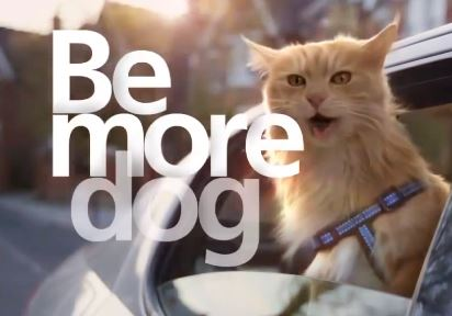 be more dog