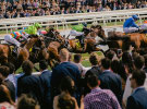 Thinkerbell wins Melbourne Racing Club media account