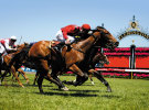 Betting brands go big for Melbourne Cup