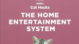 Clemenger BBDO Sydney creates Whiskas Cat Hacks