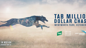 Greyhound Racing NSW promotes TAB Million Dollar Chase