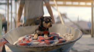 KFC and Ogilvy use man's best friend to sell burgers