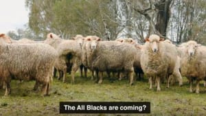 Sportsbet play on New Zealand sheep stereotype to provoke All Blacks