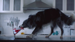 Pet Circle pushes online service in latest spot from The Core Agency