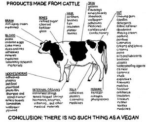 "Vegans should take note of this ""cow map"" and then let's see how self-righteously they come across."