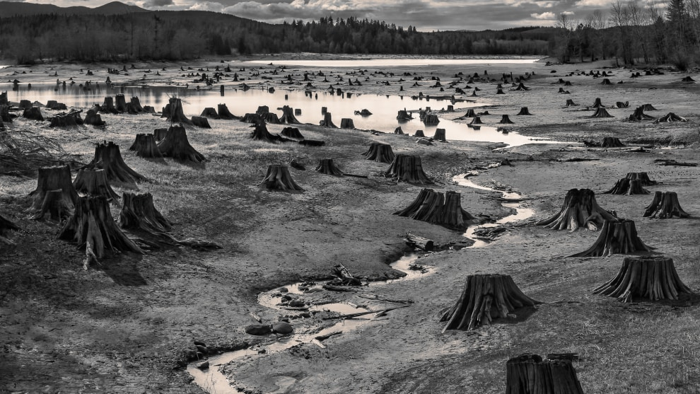 Copyright: © Hal Gage, United States of America, Shortlist, Open, Landscape (Open Competition), 2019 Sony World Photography Awards. Stumps exposed from in spring when water levels on the man-made Alder lake on the Nisqually River Dam, Washington are low.