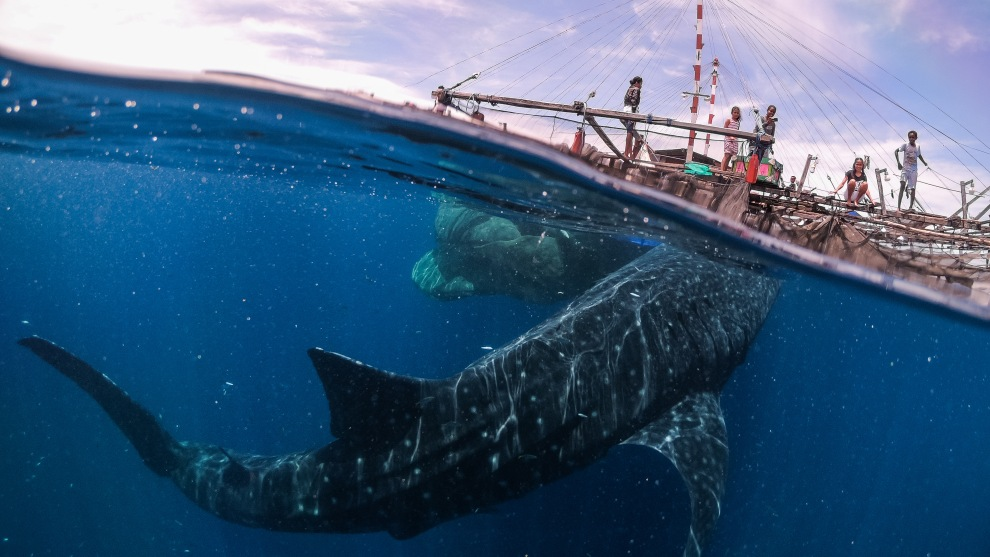 Copyright: © Marco Zaffignani, Italy, Shortlist, Open, Travel (Open competition), 2019 Sony World Photography Awards. This image represents my meeting with the whale sharks in West Papua last september. Here, in Teluk Cenderawasih National Park, you can swim with these beautiful animals, which are continually approaching the fishing platforms and surround you with their slow and impressive motion. The experience leaves you breathless.