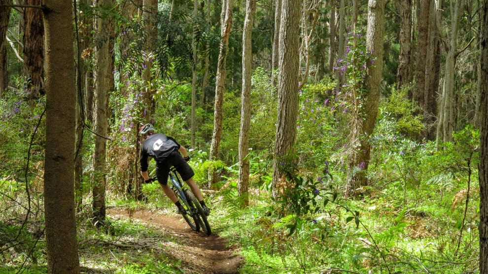 Slotting between the trees at 