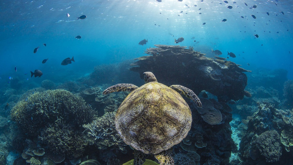 Jordan Robins, Overall winner, 2017 Wildlife and Animal Photographer of the Year, 'Tale of the turtle'