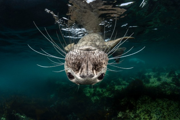 © Greg Lecoeur, National Awards 1st Place, France, Shortlist, Open competition, Natural World & Wildlife, 2019 Sony World Photography Awards.