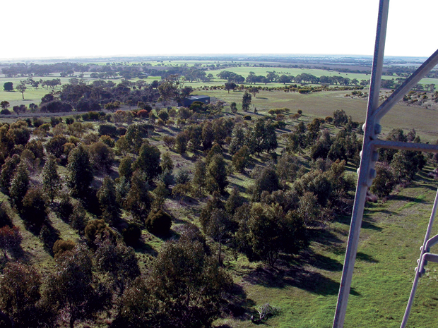 Looking down on the arboretum from the windmill.