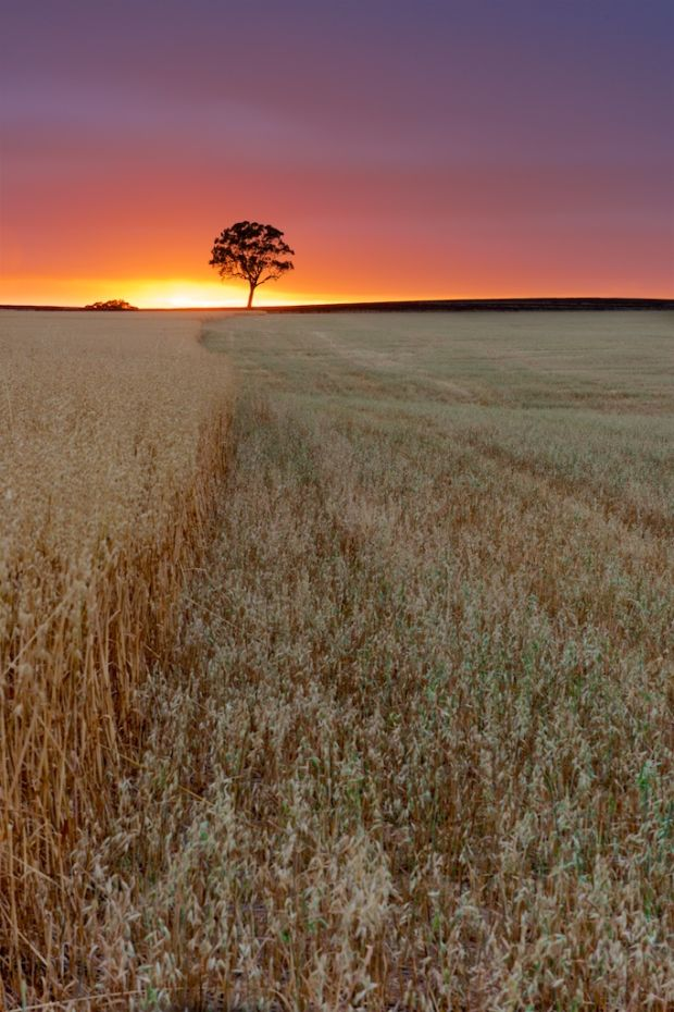 'Sunrise Over Wheat Fields,' by Grant Hunt