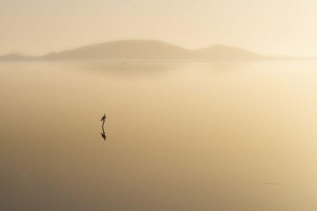 'New Day,' by Vicki Clark