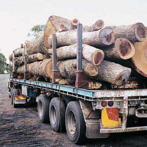 Timber_suppliers_300_19D103D0-A8CC-11E3-A435005056A302E61