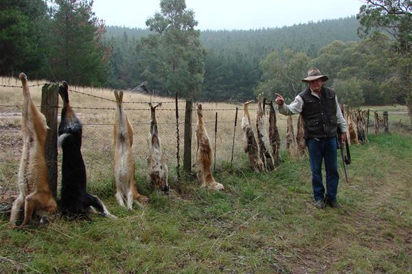 Cluster Fencing To Keep Wild Dogs Out The Plan And