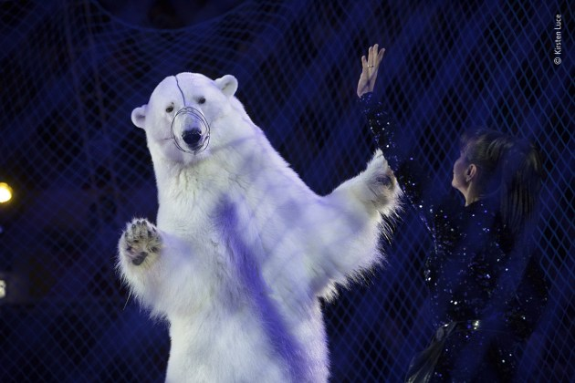 Show Business by Kirsten Luce, USA. Winner 2020, Wildlife Photojournalism: Single Image. One hand raised signalling the bear to stand, the other holding a rod, the trainer directs the ice-rink show. A wire muzzle stops the polar bear biting back, and blue safety netting surrounds the circus ring. It's a shocking sight – not because of the massive predator towering over the petite woman in her ice-skating outfit but because of the uneven power dynamic expressed by the posture of the bear and the knowledge that it is not performing by choice. But for the visitors to the travelling Russian circus – here in the city of Kazan, Tatarstan – it is entertainment. They are ignorant of how the polar bear has been trained and what it might endure behind the scenes – including the fact that, when not performing, it probably spends most of its time in a transportation cage.