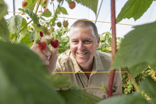 Sweet harvest: BerryWorld Australia MD Gavin Scurr