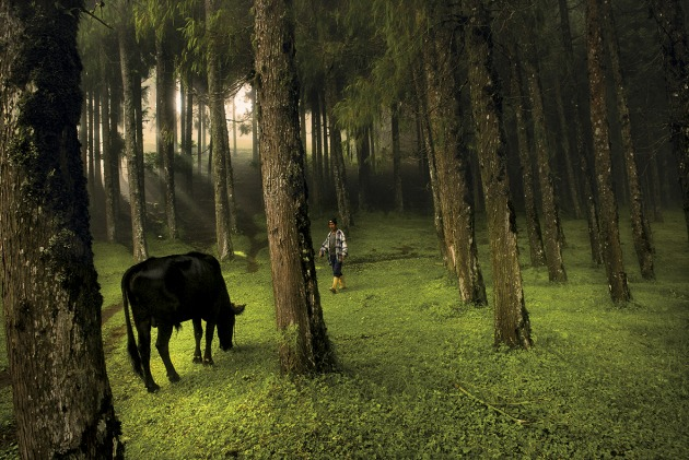 © Lynsey Addario. A man walks through a forest in Rethung Gonpa village outside of Trashigang, in east Bhutan, August 2007.