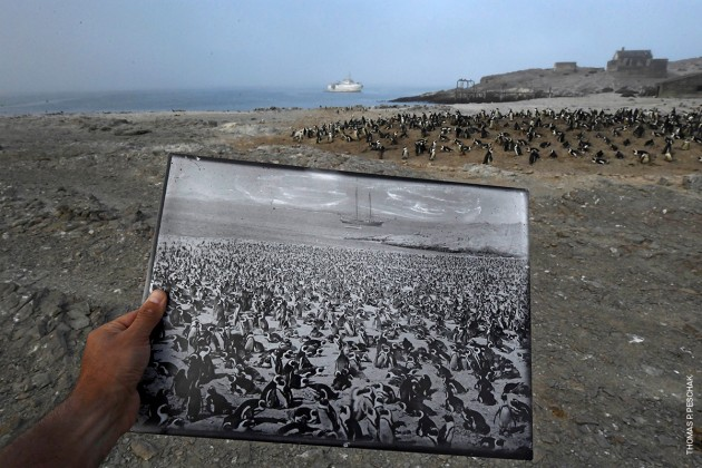 Back in Time. © Thomas P. Peschak.