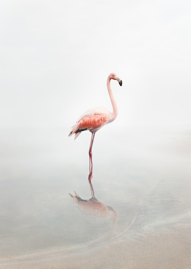 "© Alice Zilberberg. For Now Flamingo, 2018. 40"" by 28"" (Edition of 10), 60"" by 42"" (Edition of 5)."
