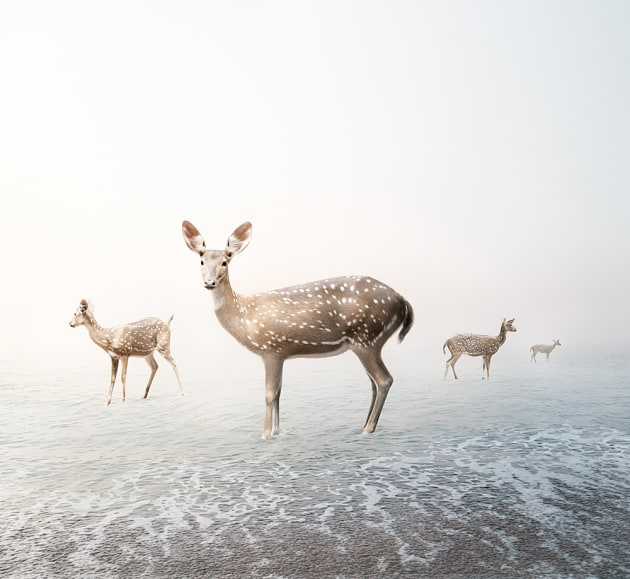 "© Alice Zilberberg. Stay My Deer, 2018. 40"" by 44"" (Edition of 10), 