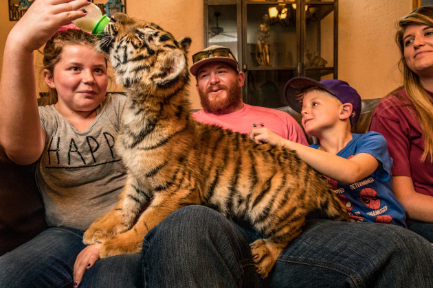 © Steve Winter, for National Geographic. The Tigers Next Door. Hulk, a 12-week-old tiger cub, is petted by the McCabe family at the Ringling Animal Care Center, in Eureka Springs, Arkansas, United States, on 2 September 2018.