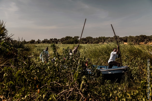 The Lake Chad Crisis. Men punt a pirogue through marshy cane thicket at the lake's edge. © Marco Gualazzini, Contrasto