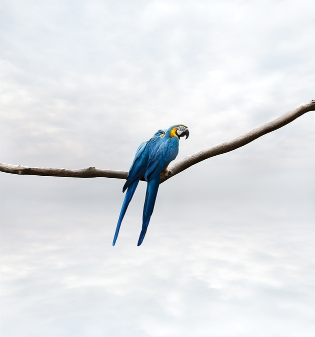 "© Alice Zilberberg. Pondering Parrots, 2018. 40"" by 58"" (Edition of 10), 60"" by 56"" (Edition of 5)."