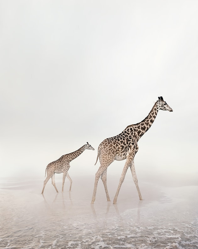 "© Alice Zilberberg. Go Giraffe, 2018. 40"" by 31"" (Edition of 10), 60"" by 47"" (Edition of 5)."