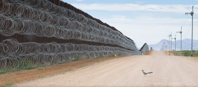 Nature Singles Nominee. © Alejandro Prieto, Mexico. Roadrunner Approaching the Border Wall. A greater roadrunner approaches the border wall at Naco, Arizona, USA on 28 April.