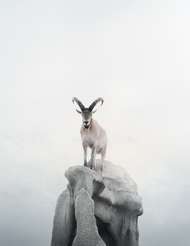 "© Alice Zilberberg. Intent Ibex, 2018. 40"" by 31"" (Edition of 10), 60"" by 45"" (Edition of 5)."