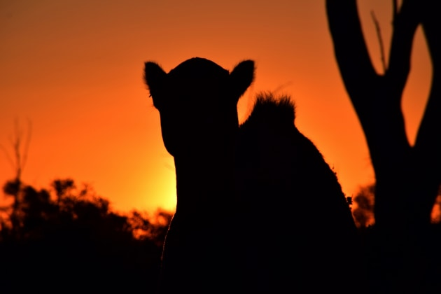 Australian outback sunset.