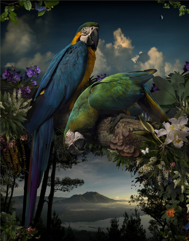 2015 winner. © Joseph McGlennon. Florilegium #1, 2014, from the series, Florilegium. Pigment ink-jet print 127 x 100cm. Monash Gallery of Art, City of Monash Collection courtesy of the artist and Michael Reid (Sydney + Berlin).