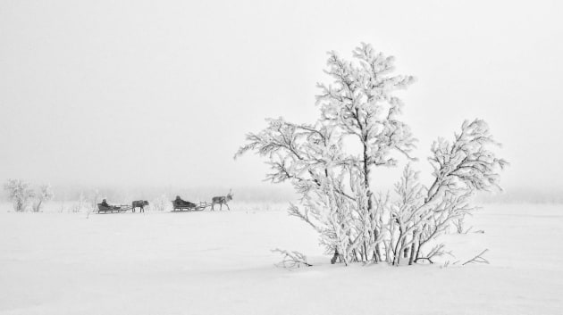 © David Evans APP M.Photog. 2019 AIPP SA Landscape Photographer of the Year and 2019 Highest Scoring Print. Reindeer sledding in Rensjön, known as one of the coldest places in Sweden. Marja Kuhmunen and her father, Nils Anders Kuhmunen are a Sámi reindeer herding family and part of a traditional way of life that is slowly decreasing as competing interests such as forestry, mining and development make life hard for the herders.