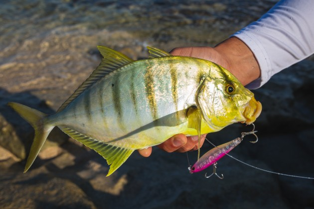 Golden trevally.jpg