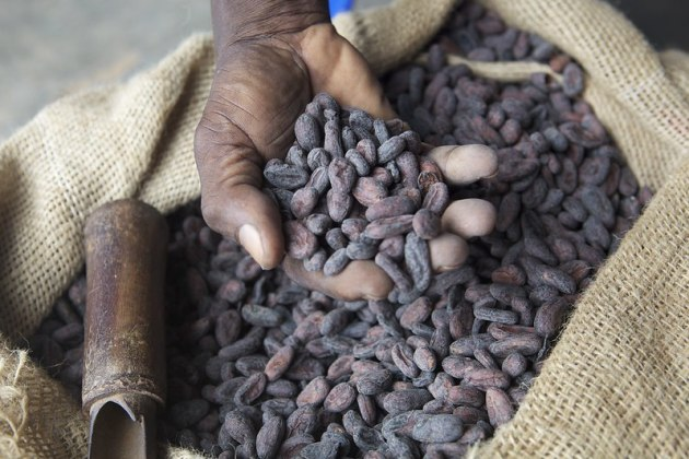 Dried cocoa beans in farmers hand. Source: Nestle.