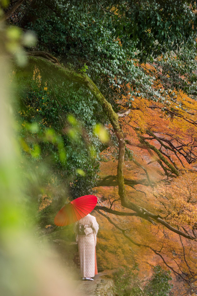 #5 Rule of Thirds: Arashiyama, Japan. Using the foliage of autumn and the lush greens of a waterfall, I stood in a bush to frame this image of a young woman in her traditional Japanese Kimono. To highlight the red umbrella blending with the vibrant autumn leaves, I placed the subject in the bottom third of the frame to let the landscape takeover. ISO 500 | f/2.8 | 1/640sec | | Olympus OM-D E-M1 MkII + 40-150mm M.Zuiko PRO lens