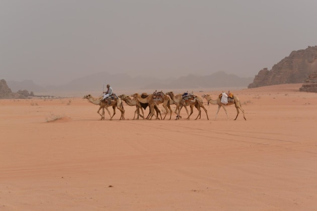 Camel train in Wadi Rum