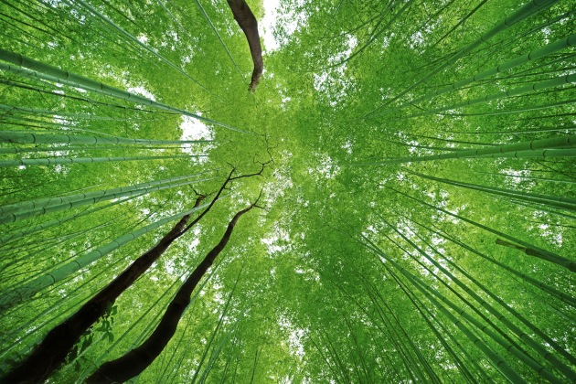#8 Look Up: Arashiyama, Japan. This immense bamboo forest was the ideal subject to capture the canopy closing in from all sides. Pointing the camera directly upward, it forces the scenery to curve in around you, even more so if you're shooting with a wide-angle lens. ISO 160 | f/2.8 | 1/50sec | Nikon D800 + 14-24mm lens.