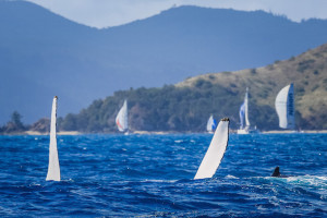 Whales at Hamilton Island Race Week. Photo Craig Greenhill/Saltwater Images.
