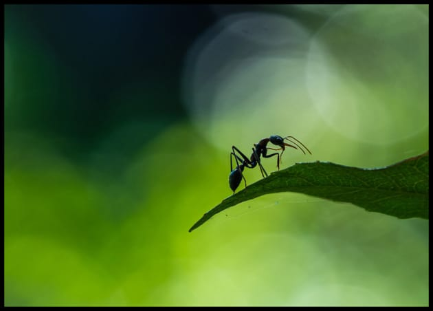 Ant Dance by Brad Smith