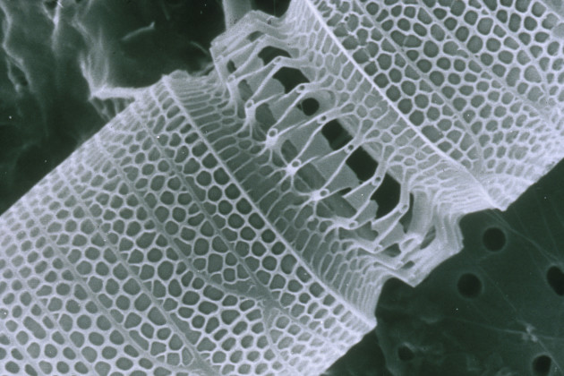 CSIRO_ScienceImage_1341_Nanotechnology1