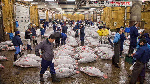 Frozen Tuna, Tsukiji Fish Market. In the frozen tuna warehouse hundreds of tuna are delivered fresh from all over the world just in time to sell at the early morning auctions.