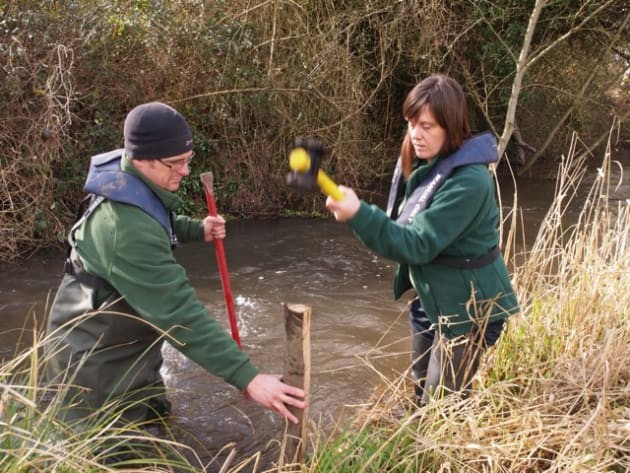 Happier Times - Volunteers hammering in stakes to secure in-stream woody debris on an Environment Agency organised Rivers Week.