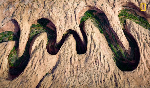 Photograph by David Swindler, 2017 National Geographic Nature Photographer of the Year Green vegetation blooms at the river's edge, or riparian, zone of a meandering canyon in Utah.