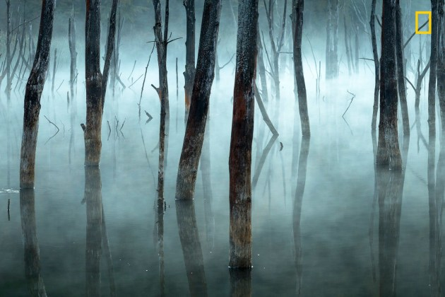 Photograph by Gheorghe Popa, 2017 National Geographic Nature Photographer of the Year. Morning fog blurs the dead trees of Romania's Lake Cuejdel, a natural reservoir created by landslides.