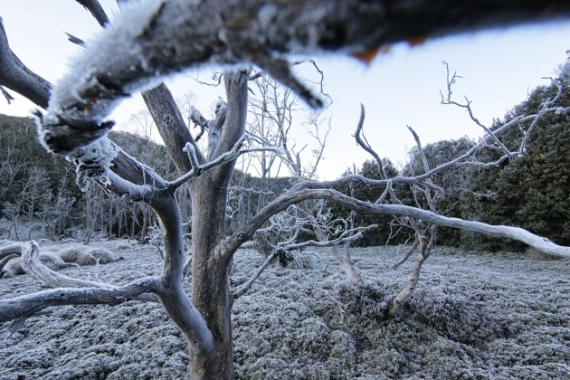An early morning mid-winter frost creates a beautiful world of white in Cradle Mountain National Park, Tasmania. August 2017.