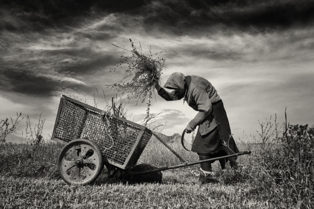 © Jeremy Woodhouse, UK. Winner – Best Single Image in a Mankind Portfolio. Coltesti, Romania. This elderly woman was cutting grass from a small plot to feed her livestock.