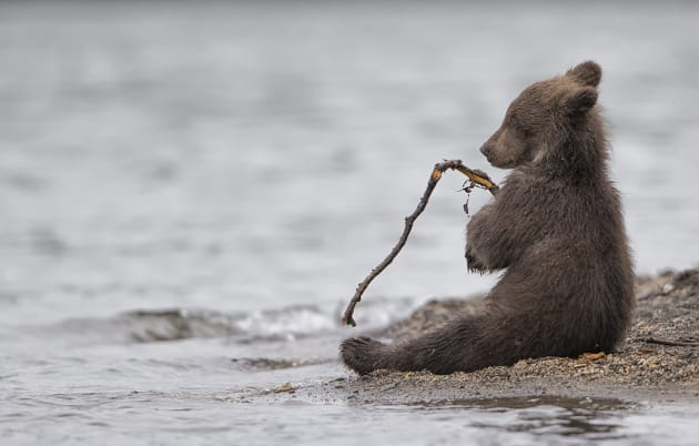 © Marco Urso, Italy. Special Mention, Wildlife & Nature