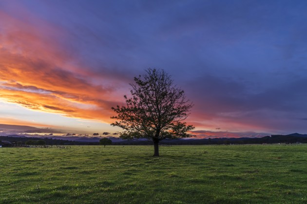Four mouse clicks and 23 seconds later my watermark was removed. Lonely tree sunset in Moruya, New South Wales. Sony A7RII, 24-70mm f/4 lens @ 24mm. 1/50s @ f8, ISO 100.